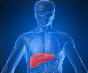 Wake Forest Lab Creates First Liver Using Human Cells