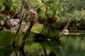 Secrets of the Maya Underworld 2/5