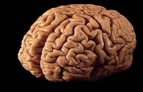 25 Facts You Should Know About Your Gray Matter; Body, Mind
