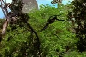 The Dawn of the Maya 3/6; Mayan