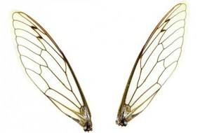 Bug Wings Inspire New Low-Cost, Biodegradable Material; green