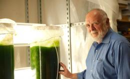 Study determines theoretical energy benefits and potential of algae fuels; science