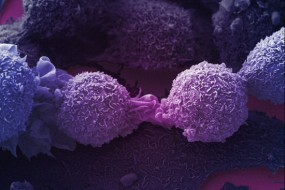 Researchers discover gene that permanently stops cancer cell proliferation