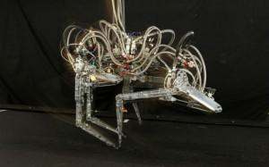 Boston Dynamics Robot Cheetah Outruns Swiftest Human