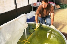 Green Crude: The Quest To Unlock Algae's Energy Potential