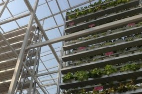 TOWERS OF VEGETABLES GO UP AS SINGAPORE BUILDS FIRST VERTICAL FARM