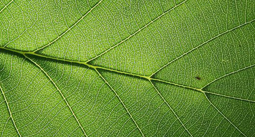 Fuel-Producing 'Bionic Leaf' Advances-awaken