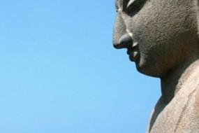 WISDOM-WELLNESS-AWAKEN