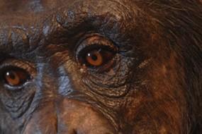 chimp1_awaken