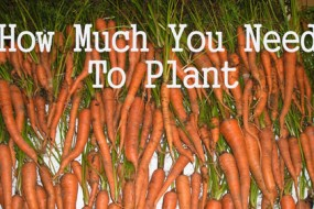 how-much-to-plant-Awaken