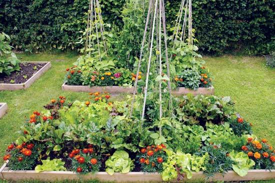 Intensive Gardening Grow More Food In Less Space Awaken
