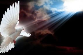 Pigeon-Of-Peace-Awaken