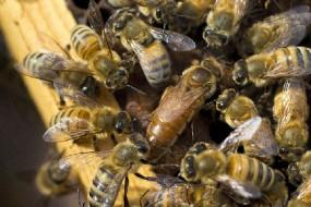 bees_bees-awaken