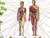 Healing-the-Seven-Chakras-with-Herbs--Awaken