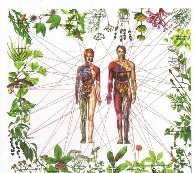Healing-the-Seven-Chakras-with-Herbs-Awaken