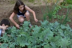 Kids_harvesting_kale-Awaken