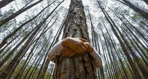 Resultado de imagem para hugging trees