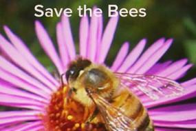 Save-the-Bees-Awaken