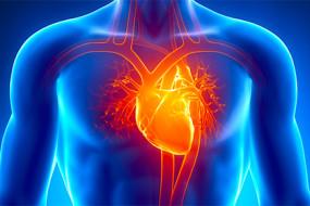 human-heart-awaken