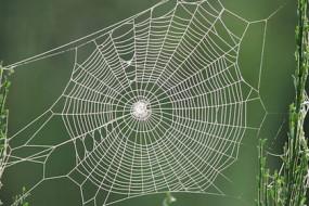 spider_web-Awaken