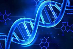 DNA-Awaken