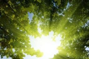 sunshine-Awaken