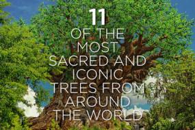 Sacred-Trees-awaken