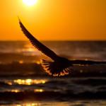 flying-birds-AWAKEN