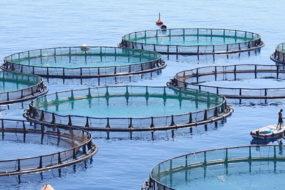 Fish-Farms-awaken