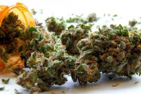 Medical-Marijuana-Awaken