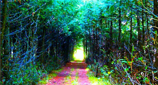 You-Are-The-Guru-Awaken