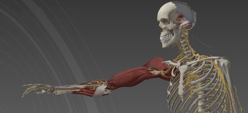 Anatomy Textbooks Are Officially Obsolete With Rise Of New ...