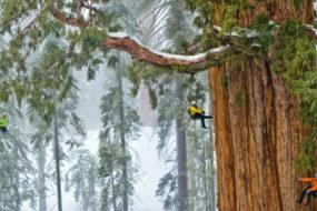 3,200-Year-Old-Tree-awaken