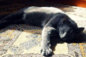 laziness-cat-awaken