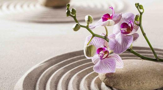 zen-garden-awaken