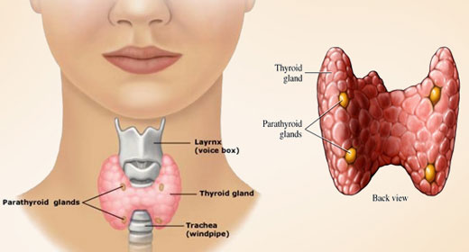 how to tell if your thyroid is enlarged