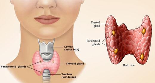 thyroid-awaken