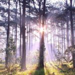 forest-sunlight-nature-trees-awaken