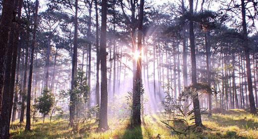 forest-sunlight-nature-trees-awaken