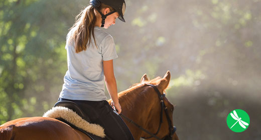 Horse-awaken