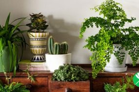 Image-Plants-awaken