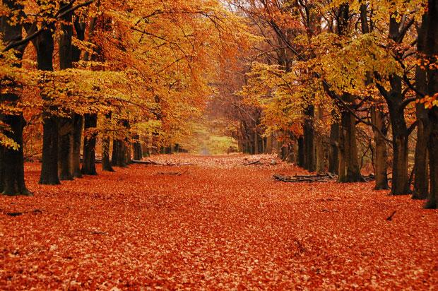 Autumn-awaken