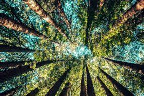 tree-australia-awaken