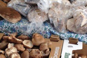 Mushrooms-awaken