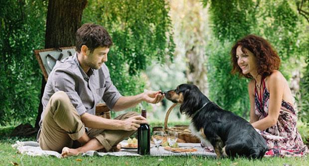 love-more-partner-dog-awaken