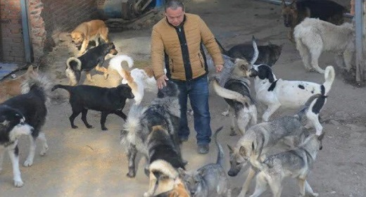 awaken-Chinese Man Spends $400,000 To Buy A Slaughterhouse & Saves 2,000 Dogs.