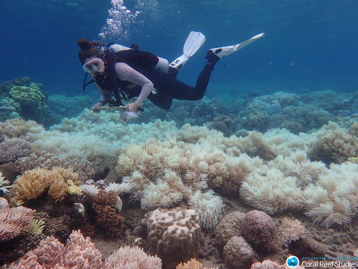 The Great Barrier Reef was hit by devastating, back-to-back bleaching events in 2016 and 2017 that left wide swaths of corals