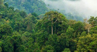 jungle-morning-fog-awaken