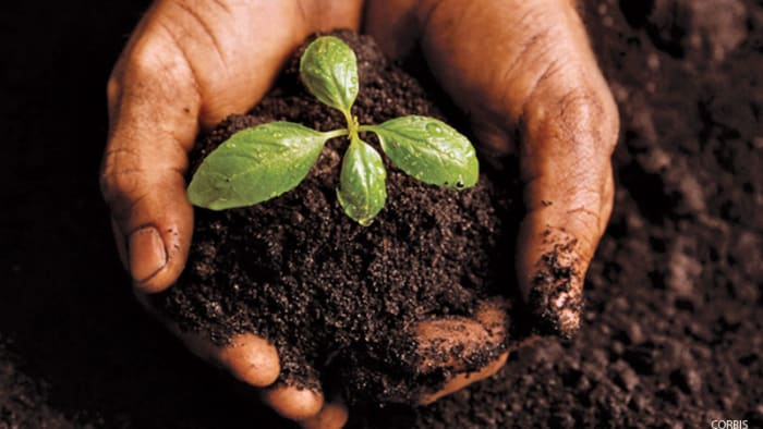 soil, plant, growing veggies, garden