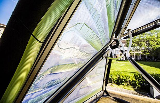 4_urban-algae-canopy-awaken